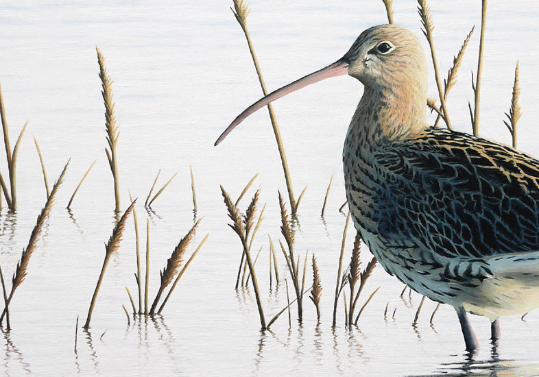 Curlew Spring Tide by Chris Lodge