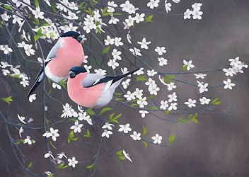 bullfinches Bird Print by Chris Lodge