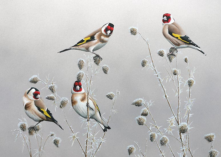 Winter Goldfinches Print- A Limited Edition Print By Bird Artist Chris Lodge