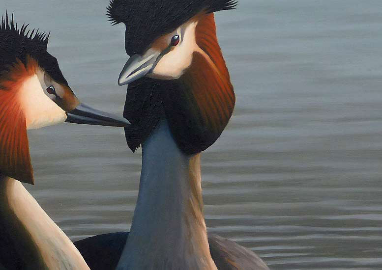 Great Crested Grebes Print - A Limited Edition Print By Chris Lodge