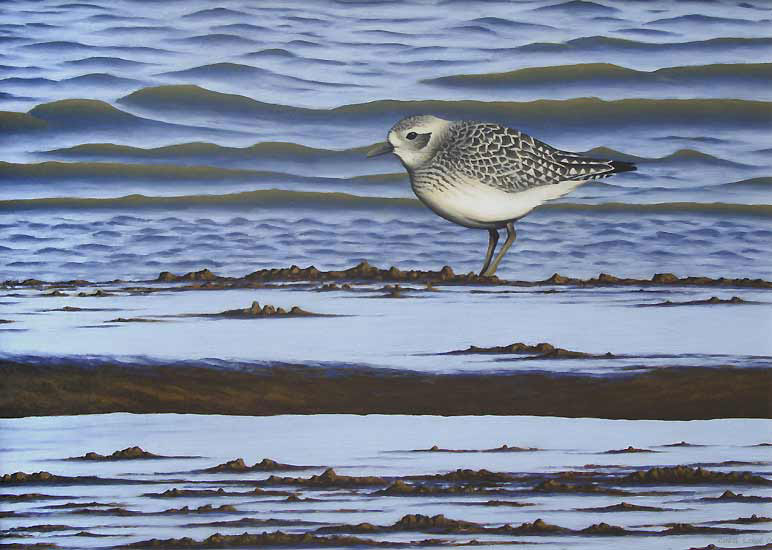 Grey Plover Limited Edition Bird Print