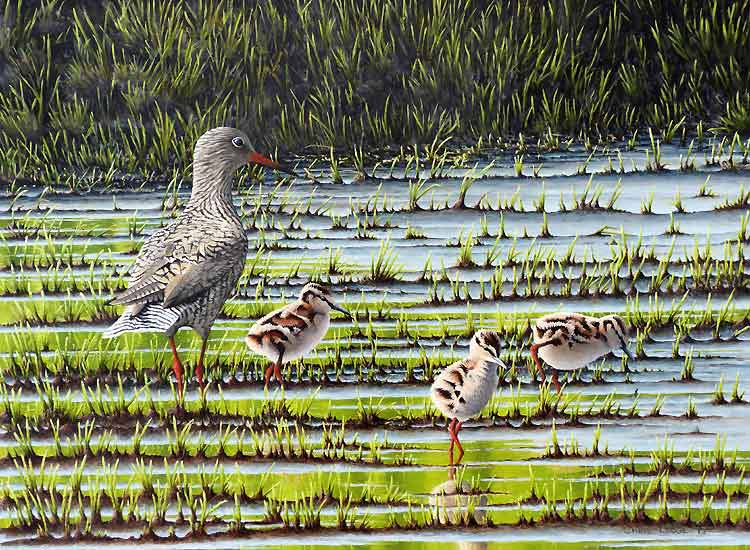 Redshank with Chicks Print- A Signed Limited Edition Print By Bird Artist Chris Lodge