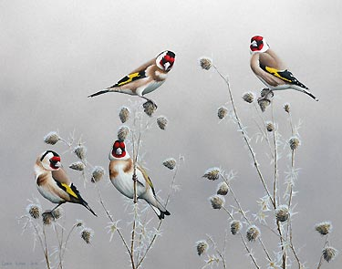 Winter Goldfinches Bird Print by bird artist Chris Lodge