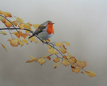 Robin in Autumn Beech Bird Print of an oil painting by bird artist Chris Lodge